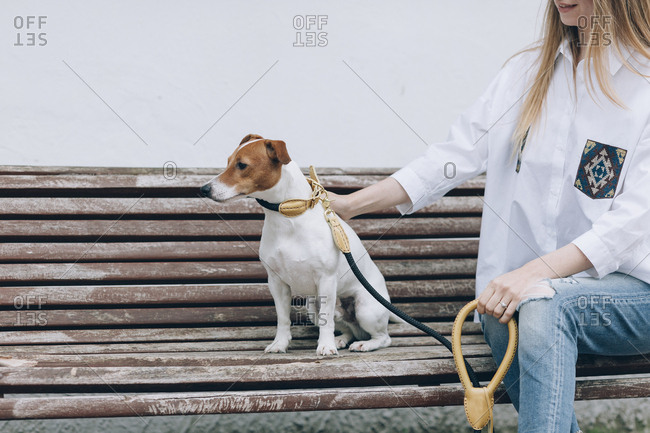 Midsection of woman petting Jack Russell Terrier while sitting on beach against wall