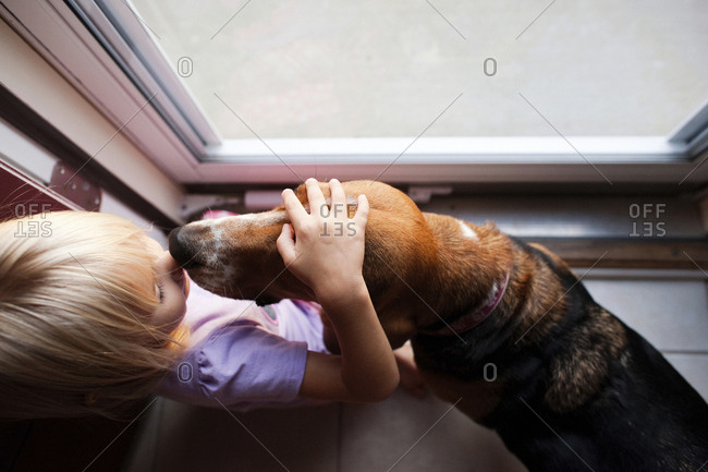 Overhead view of girl petting beagle while standing by window