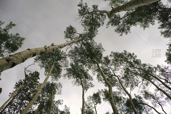 Low angle view of trees at forest against sky