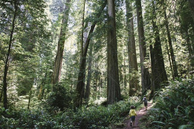 Rear view of siblings running on trail amidst trees in forest