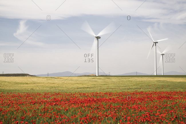 Wind turbines on field with poppy flowers in foreground