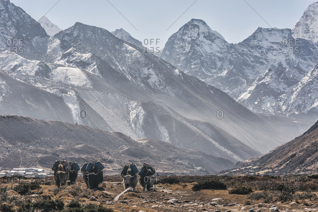 Yaks carrying luggage while walking against mountains at Sagarmatha National Park