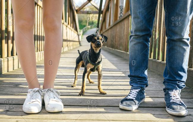 Dog between legs of couple on a bridge