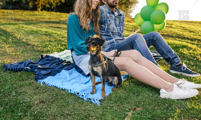 Young couple sitting on blanket on a meadow with their dog