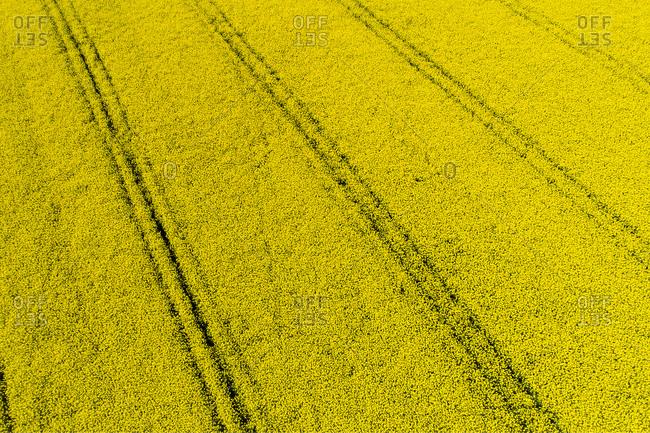 Germany- Bavaria- Tire tracks in a rape field