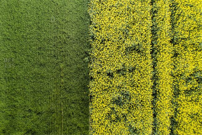 Germany- Bavaria- Aerial view of rape fields