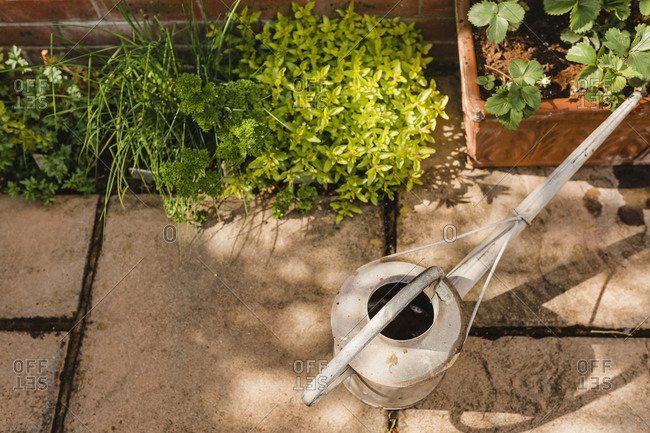Watering can next to plants