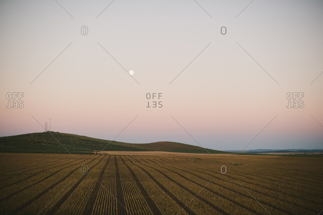 Agricultural field at dusk, Portugal