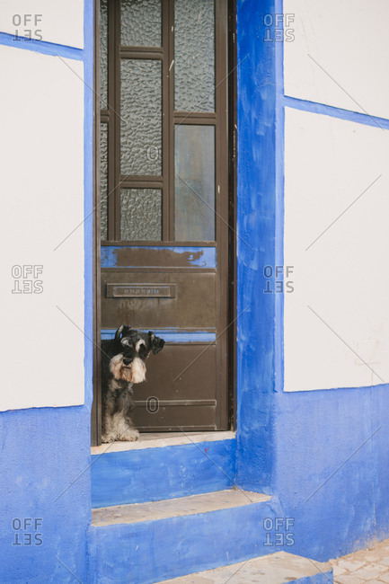 Dog looking out door in Portugal