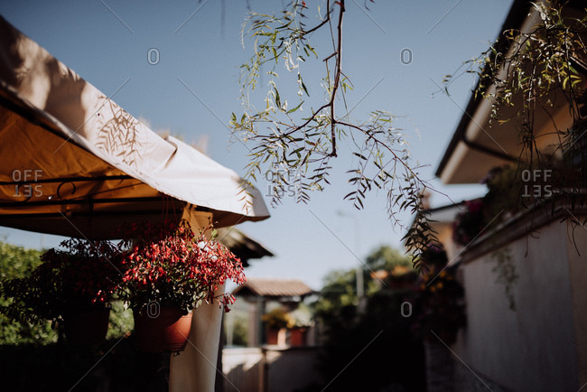 Flowers hanging from a canopy