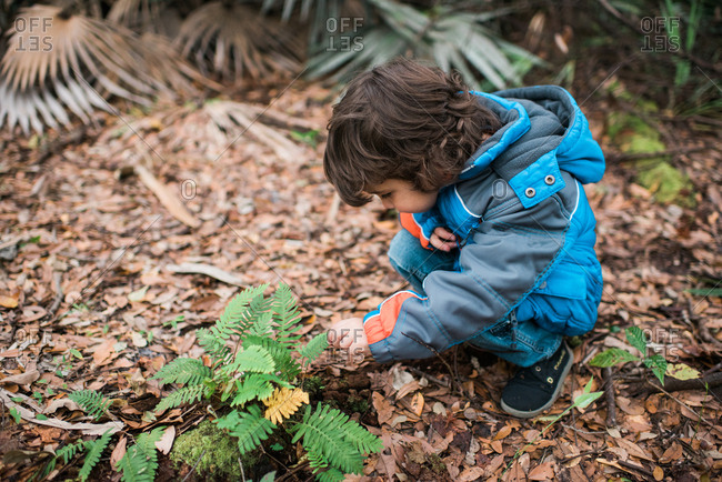 Young boy examines a fern in forest