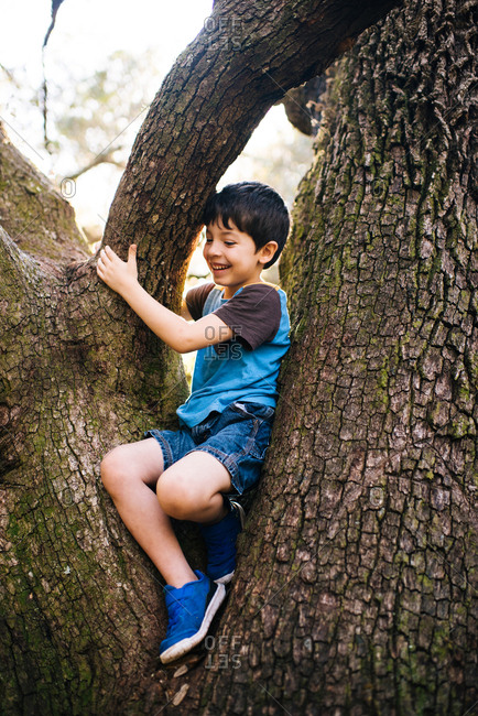 Happy young boy climbing a tree