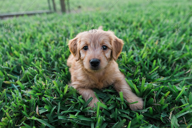 Cute puppy lying on grass