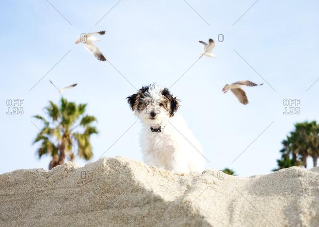 Fluffy dog on beach with seagulls flying overhead