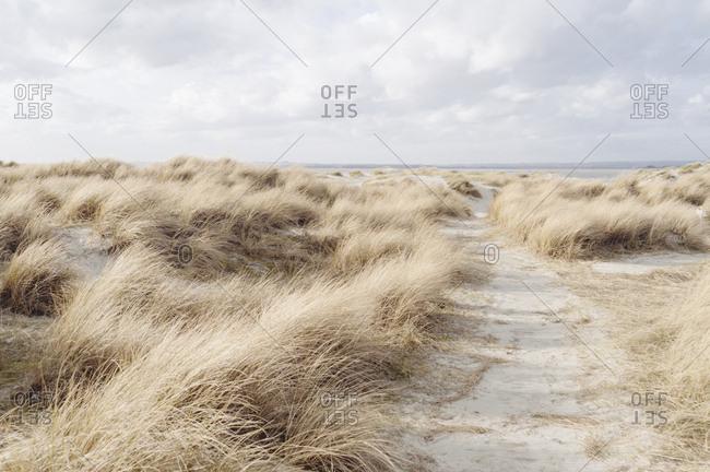 Trail through sand dunes