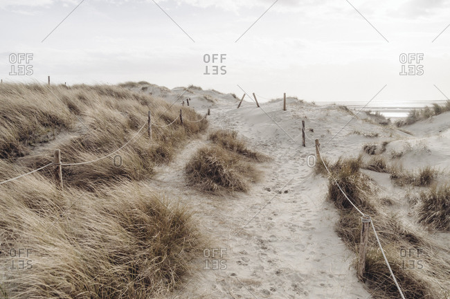 Sand dune trail by ocean