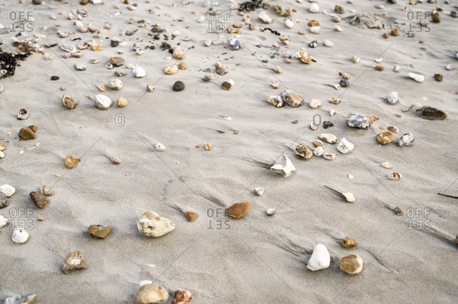 Rocks and shells on beach