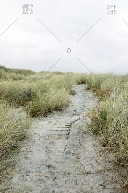 A trail through sandy coastal dunes