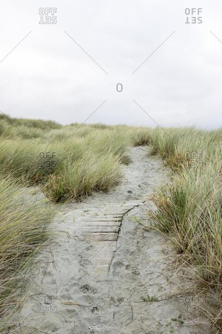 A trail through sandy coastal dunes