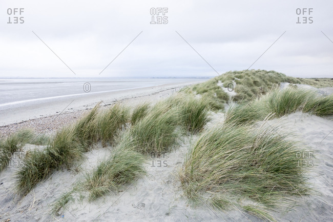 Grassy sand dunes by sea
