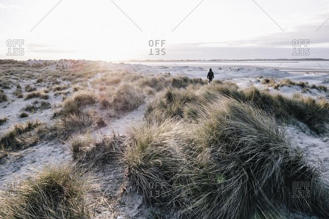 Person walking through coastal grasslands