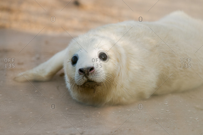 Seal pup on a beach