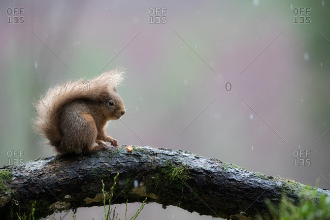 Squirrel perched on branch