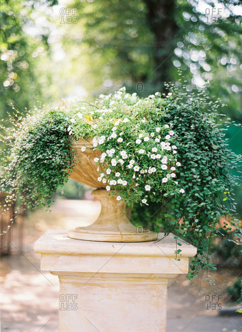 Flowering plant on outdoor pedestal