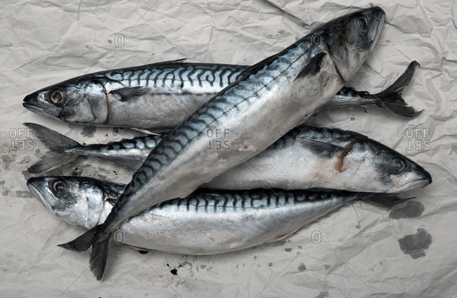 Mackerel fish on a wrapping paper