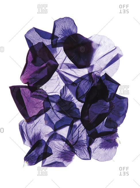 Purple blue flower petals