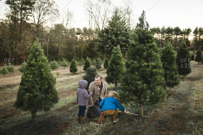 Father and two kids looking for a Christmas tree