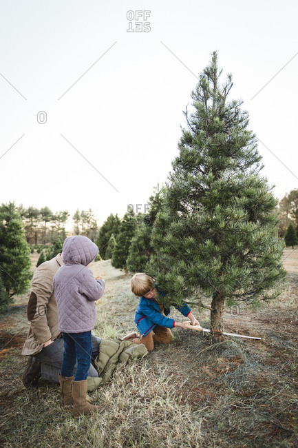 Father and children cutting down a Christmas tree