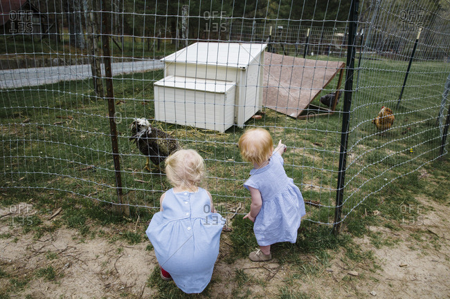 Girls looking at chickens at the Carl Sandburg Home, Flat Rock, North Carolina