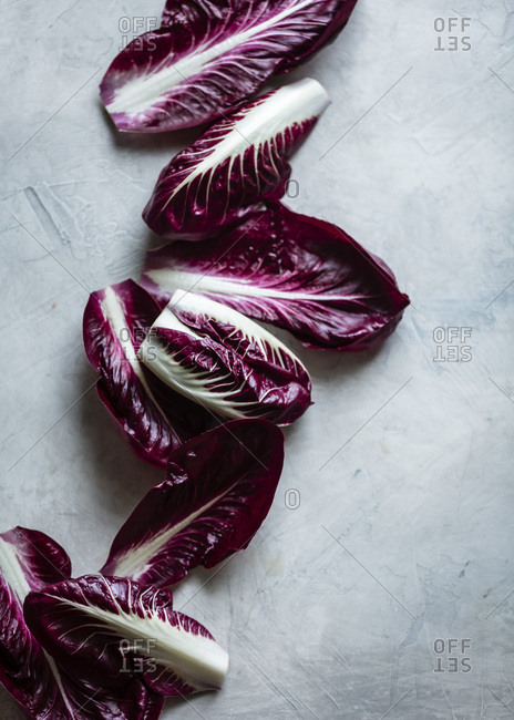 Chicory leaves from the Offset Collection