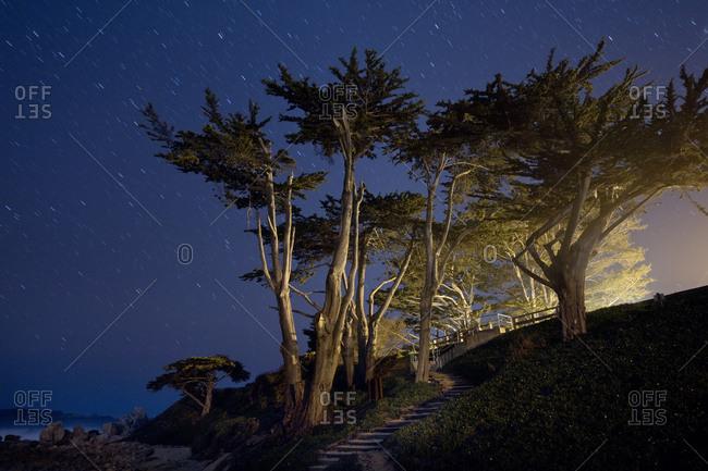 Trees, Fog and Stars