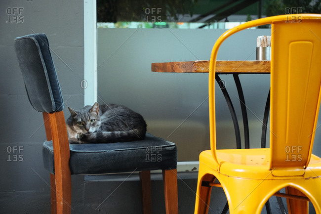 Cat lying in outdoor chair