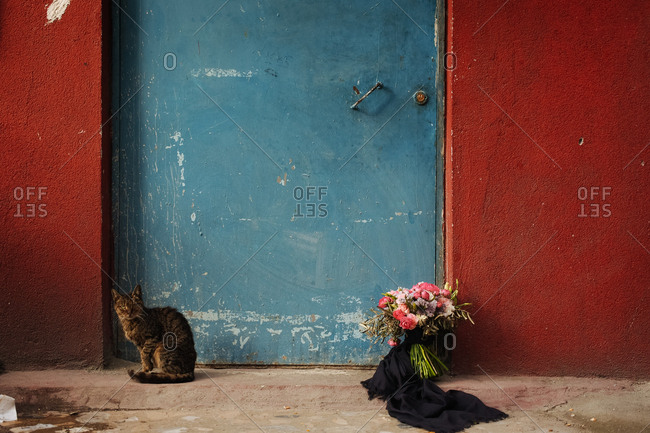 Cat and flowers by a door