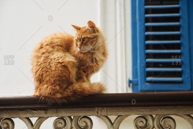 Cat on railing staring off