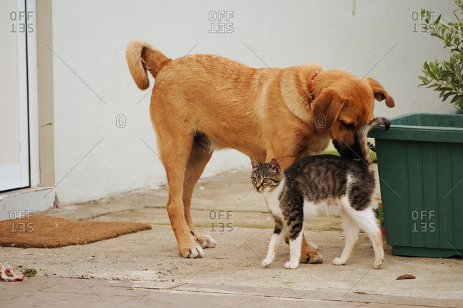 Cat greeting a dog on terrace