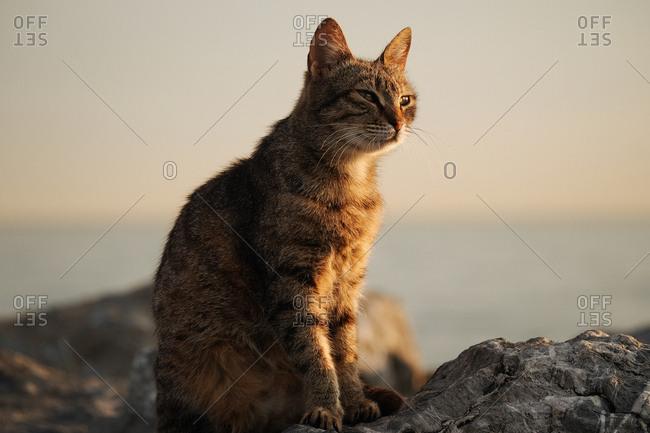 Sleepy cat at dusk on rocks