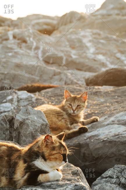 Cats resting on rocks outside