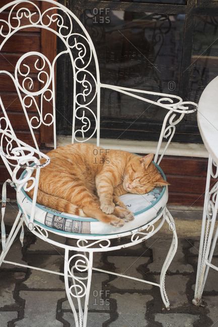 Cat sleeping in a cafe chair