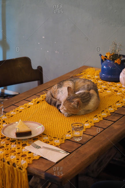 Cat asleep on table by pie, Istanbul