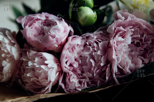 Close-up of pink peonies