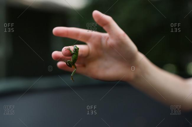 Frog clinging to little boy's finger