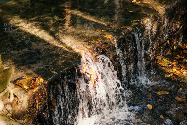Fallen leaves in a waterfall
