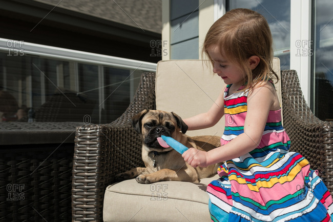 Pug dog licking a little girl's popsicle