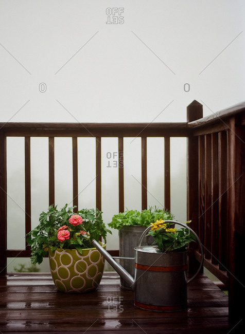 Watering can and potted plants on corner of wooden deck on a foggy day in the Blue Ridge Mountains