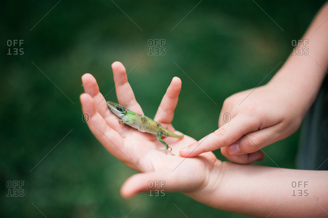 Child holding a lizard in hand
