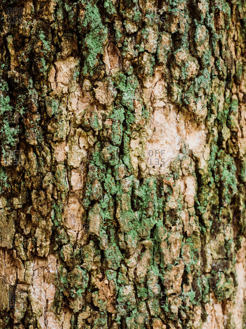 Detail shot of tree bark covered in moss
